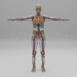 Full Anatomy Model