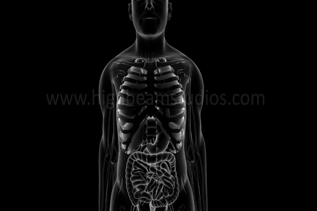 Medical Animations, Medical Animation,